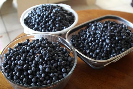 blueberries_June2013