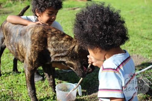 pitbull puppy and kids