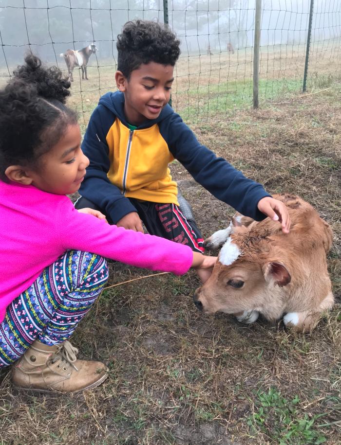 crafty gemini kids with baby calf dec 2017
