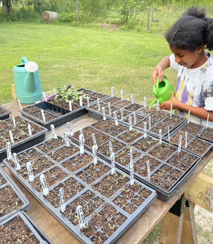 watering seedlings crafty gemini homestead